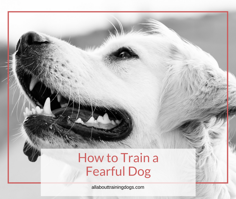 How To Train A Fearful Dog